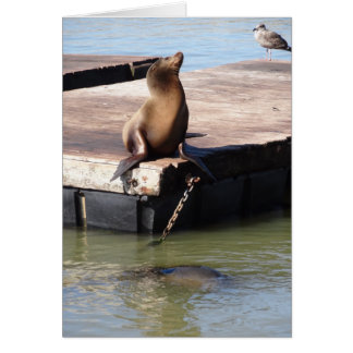 San Francisco Pier 39 Sea Lion Card