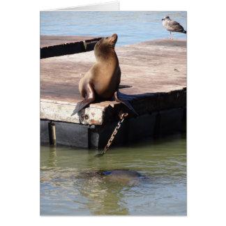 San Francisco Pier 39 Sea Lion Greeting Card