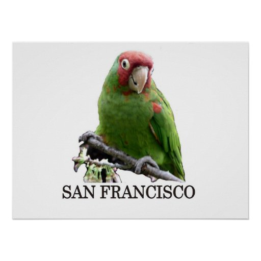 San Francisco Wild Parrot #7 Posters