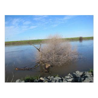 San Joaquin River, Lathrop, CA 2 Postcard