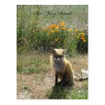 San Juan Island Fox Post Card