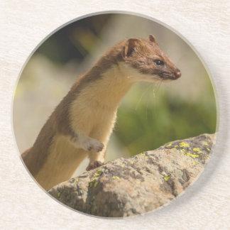 San Juan Mountains. Short-Tailed Weasel Coaster