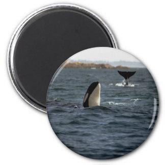 San Juan Whales 6 Cm Round Magnet
