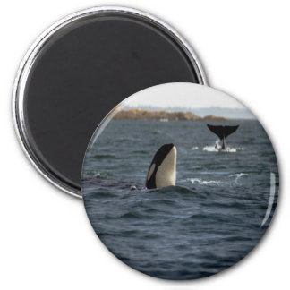 San Juan Whales Magnet