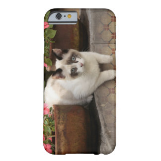 San Miguel de Allende, Mexico. Kitten rests in Barely There iPhone 6 Case