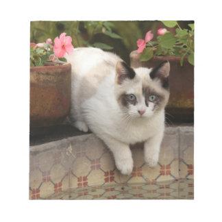 San Miguel de Allende, Mexico. Kitten rests in Notepad