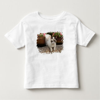 San Miguel de Allende, Mexico. Kitten rests in Toddler T-Shirt