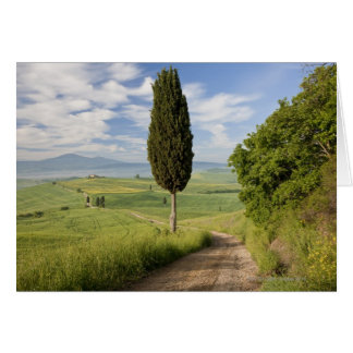 San Quirico d'orcia, Val d'orcia, Tuscany, Italy Card
