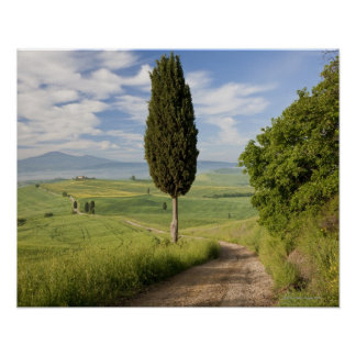 San Quirico d'orcia, Val d'orcia, Tuscany, Italy Poster