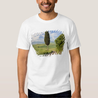 San Quirico d'orcia, Val d'orcia, Tuscany, Italy T Shirt