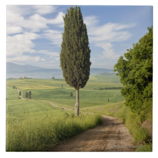 San Quirico d'orcia, Val d'orcia, Tuscany, Italy Tile