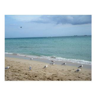 Sand and Seagulls Postcard