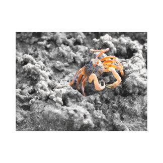 Sand bubbler crab stretched canvas print