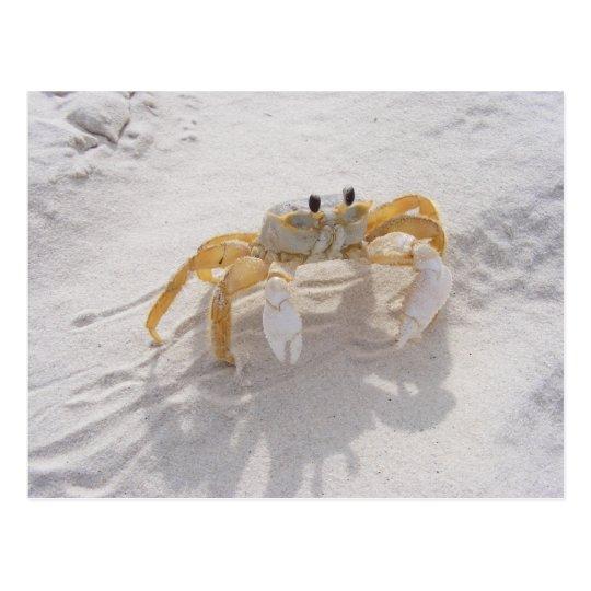 Sand Crab Postcard