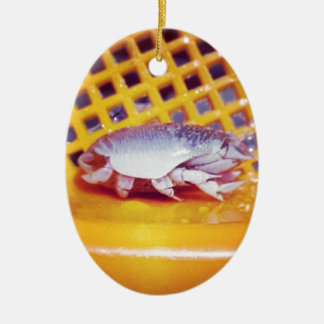 Sand Crabs (Photography) Christmas Ornament