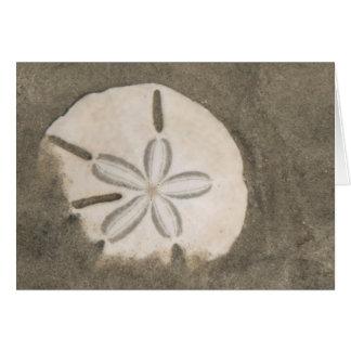 Sand dollar (Echinarachnius parma) Card