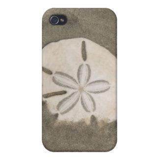 Sand dollar (Echinarachnius parma) Cases For iPhone 4