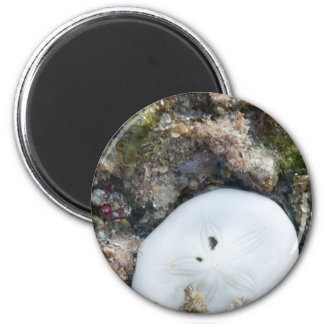 Sand Dollar in the Fiji Reef at Low Tide 6 Cm Round Magnet