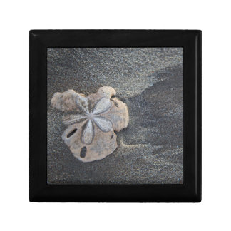 Sand dollar on sand gift box