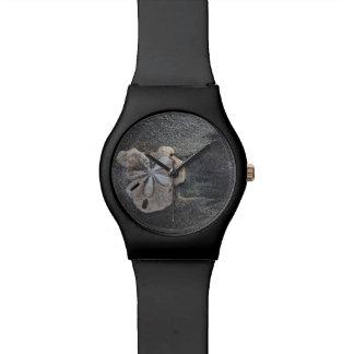 Sand dollar on sand watch