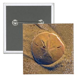 Sand Dollar Revealed On Beach | Hilton Head Island 15 Cm Square Badge