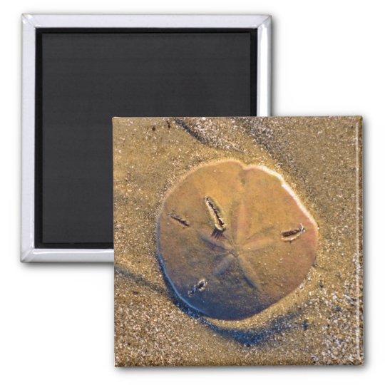 Sand Dollar Revealed On Beach | Hilton Head Island Square Magnet