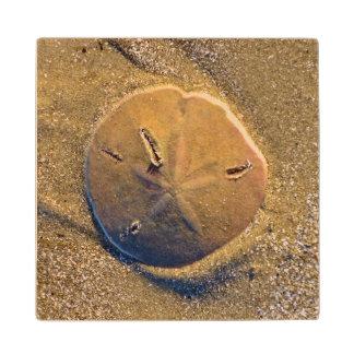 Sand Dollar Revealed On Beach | Hilton Head Island Wood Coaster