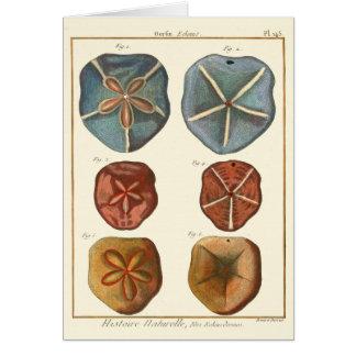 Sand Dollars Gems Card