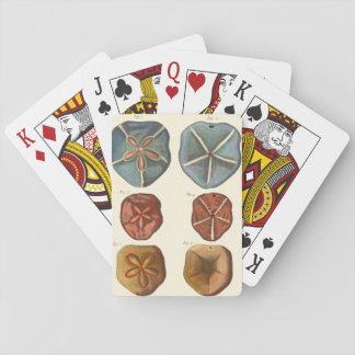 Sand Dollars Gems Playing Cards