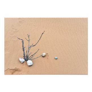 sand dune stones nature ikebana tree branches photo
