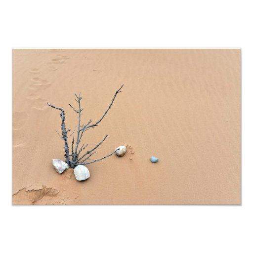 sand dune stones nature ikebana tree branches photographic print