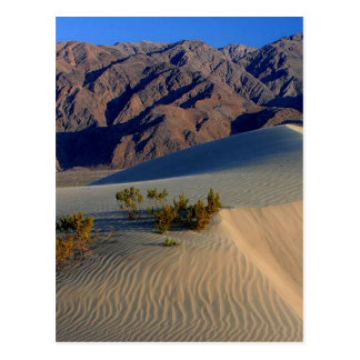 Sand Dunes Death Valley Postcard