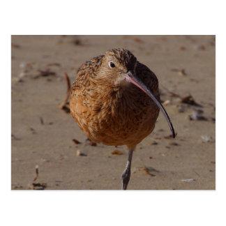 Sand Piper Bird On Beach Postcards