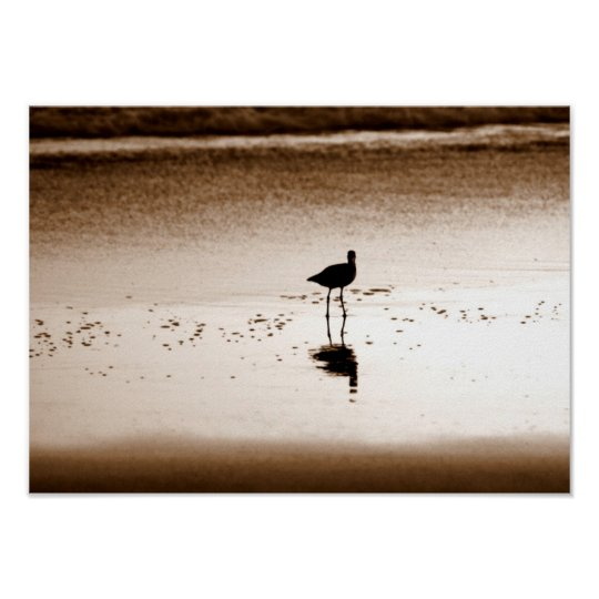 Sand Piper Poster