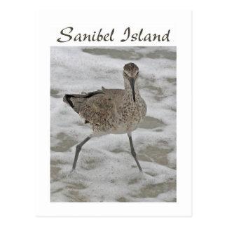 Sand Piper Sanibel Island Postcard