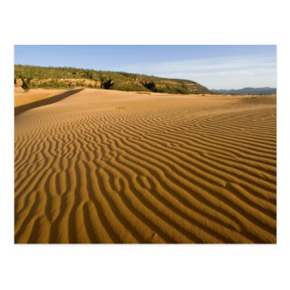 Sand ripples and dunes at Coral Pink Sand 2 Postcard