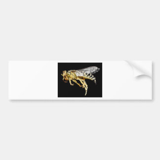Sand wasp bumper sticker