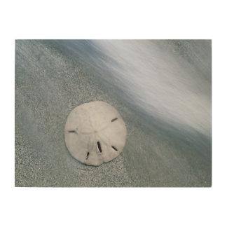 Sanddollar on Beach   Sanibel Island, Florida Wood Print