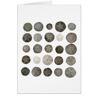 Sanddollars Note Card