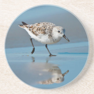 Sanderling (Calidris Albe) Feeding On Wet Beach Coaster