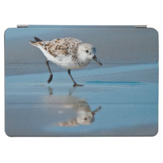 Sanderling (Calidris Albe) Feeding On Wet Beach iPad Air Cover
