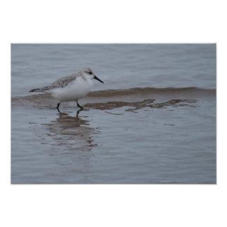 Sanderling In Sea Art Photo