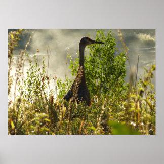 Sandhill Crane at Moose Ponds in Grand Teton Poster