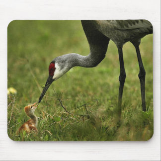 Sandhill Crane & Baby mousepad