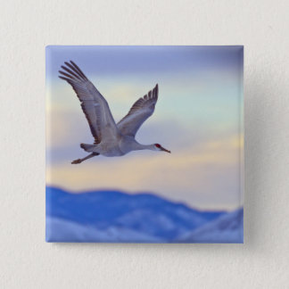 Sandhill crane flying at sunset 15 cm square badge