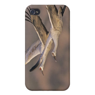 Sandhill Crane, Grus canadensis, adult and Cover For iPhone 4