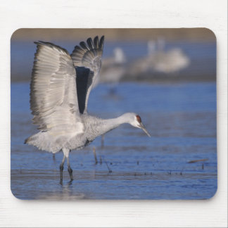 Sandhill Crane, Grus canadensis,adult Mouse Pad