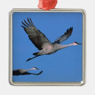 Sandhill Crane Grus canadensis) in flight. Silver-Colored Square Decoration