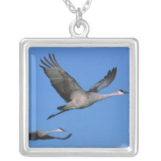 Sandhill Crane Grus canadensis) in flight. Silver Plated Necklace