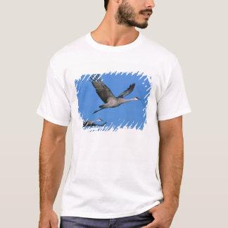 Sandhill Crane Grus canadensis) in flight. T-Shirt